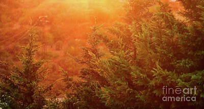 Photograph - Beautiful Rain Landscape by Anna Om