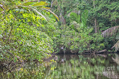 Photograph - Beautiful Rainforest In Costa Ricia by Patricia Hofmeester