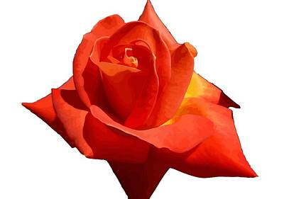 Photograph - Beautiful Red Rose Photograph Vector by Tracey Harrington-Simpson