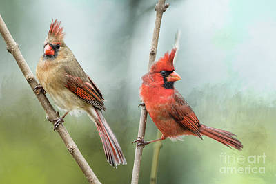 Photograph - Beautiful Redbird Pair by Bonnie Barry