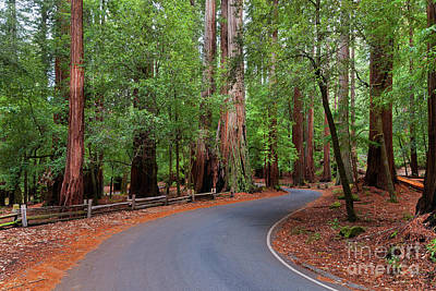 Beautiful Redwood Grove Art Print