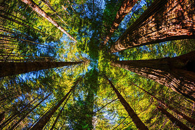 Photograph - Beautiful Redwood Trees In Redwood National Park California Usa by Vishwanath Bhat