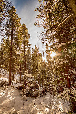 Forest Photograph - Beautiful Rocky Mountain Winter Day by James BO Insogna