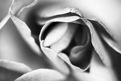 Photograph - Beautiful Rose Abstract In Monochrome by Vishwanath Bhat