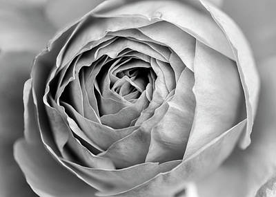 Photograph - Beautiful Rose Closeup In Black And White by Vishwanath Bhat