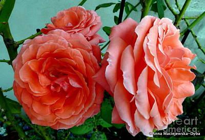 Folkartanna Photograph - Beautiful Roses by Anna Folkartanna Maciejewska-Dyba