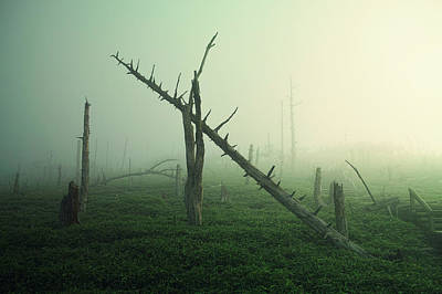 Fog Photograph - Beautiful Rot by Koji Sugimoto