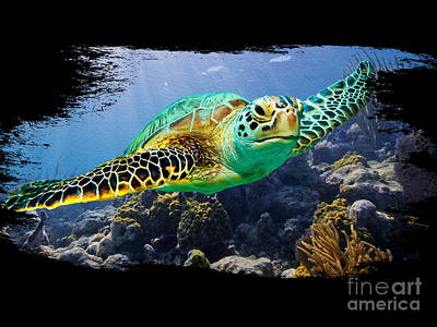 Beautiful Sea Turtle On Black Art Print by Jon Neidert