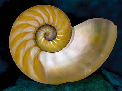 Photograph - Beautiful Shell by Jean Noren