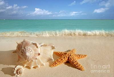 Beautiful Shell On Sand Art Print by Boon Mee