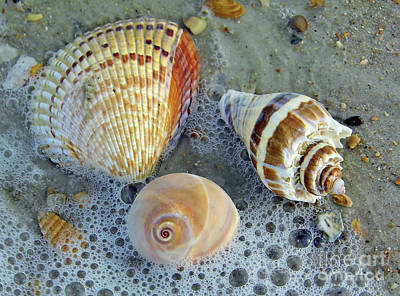 Beautiful Shells In The Surf Art Print by D Hackett