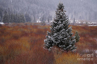 Photograph - Beautiful Snow Flocked Tree by Loriannah Hespe