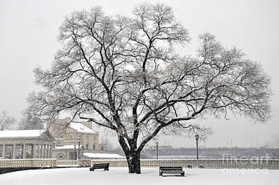 Photograph - Beautiful Snow Tree by Andrew Dinh