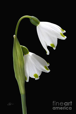 Photograph - Beautiful Snowdrops Spring Flowers Delight by Joy Watson