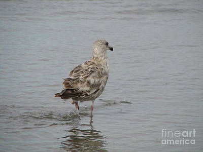 Photograph - Beautiful Spotted Seagull Wading Into Coastal Water by DejaVu Designs