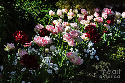 Tulips Photograph - Beautiful Spring Flowers by Louise Heusinkveld