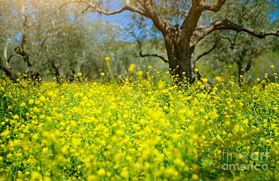 Photograph - Beautiful Spring Garden by Anna Om