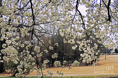 Photograph - Beautiful Spring by Lydia Holly
