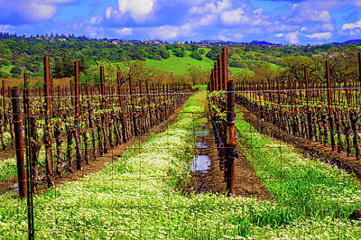 Sonoma County Vineyards Photograph - Beautiful Spring Vinyard by Garry Gay