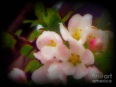 Photograph - Beautiful Springtime Blooms by Kay Novy