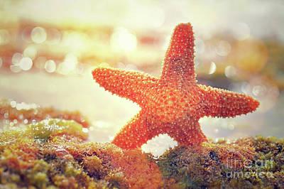 Photograph - Beautiful Starfish by Anna Om