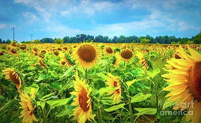 Photograph - Beautiful Sunflower Field by Anna Om