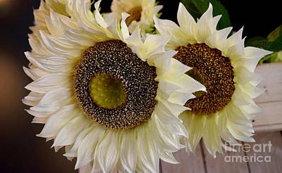 Photograph - Beautiful Sunflowers by Jeannie Rhode