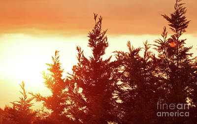 Photograph - Beautiful Sunset Landscape by Anna Om
