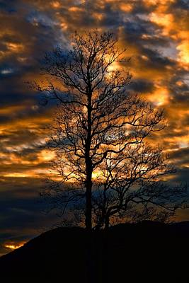 Beautiful Sunset Tree Silhouette Art Print by Dan Sproul
