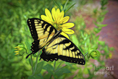 Photograph - Beautiful Swallowtail Butterfly by Sue Melvin