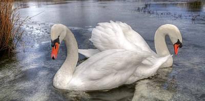 White Swan Photograph - Beautiful Swans by Svetlana Sewell