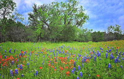 Beautiful Texas Spring Art Print