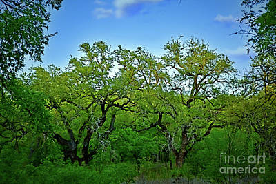 Photograph - Beautiful Texas View 1-14 by Ray Shrewsberry