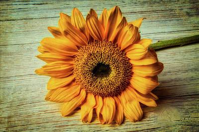 Photograph - Beautiful Textured Sunflower by Garry Gay