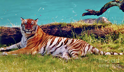 Photograph - Beautiful - Tiger by D Hackett