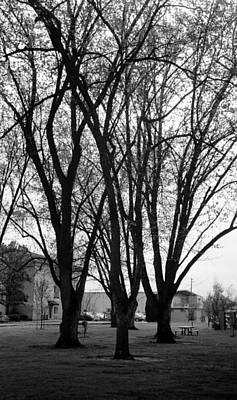 Photograph - Beautiful Treeline by Teri Schuster