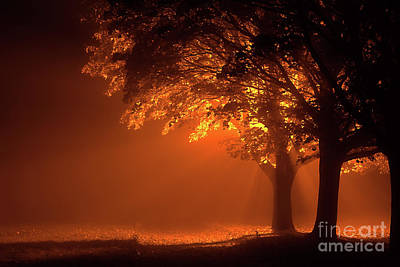 Streetlight Photograph - Beautiful Trees At Night With Orange Light by Simon Bratt Photography LRPS