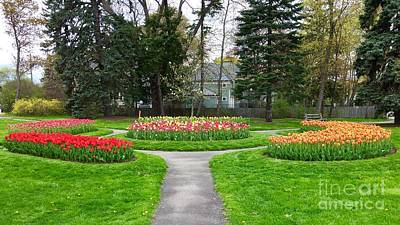 Photograph - Beautiful Tulip Beds In Full Bloom by Patricia E Sundik