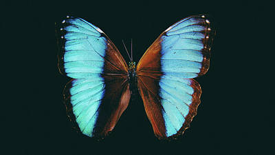 Digital Art - Beautiful Turquoise Butterfly Art - Large Photography Prints  by Wall Art Prints