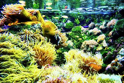 Photograph - Beautiful Underwater Sea Life by Kirsten Giving