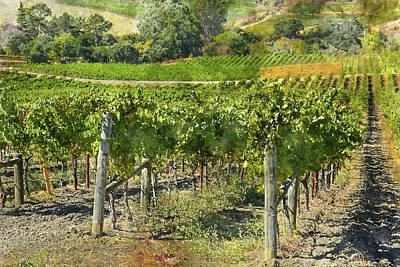 Photograph - Beautiful Vineyard In Napa Valley California by Brandon Bourdages