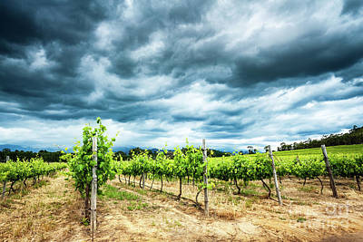 Photograph - Beautiful Vineyard Landscape by Anna Om