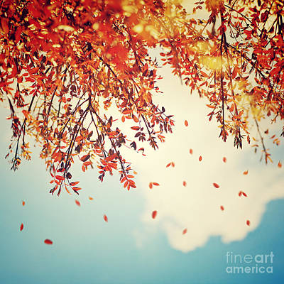 Photograph - Beautiful Vintage Autumn Background by Anna Om