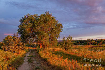 Photograph - Beautiful Warm Light On The Trees And Landscape by Ronda Kimbrow