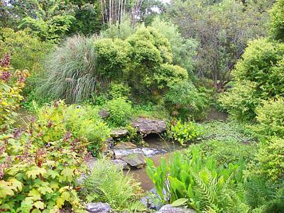 Photograph - Beautiful Water Garden by Sheri McLeroy