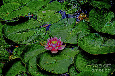 Photograph - Beautiful Water Lily 2 by Ray Shrewsberry