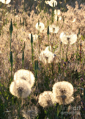 Photograph - Beautiful Weeds by Carol Groenen