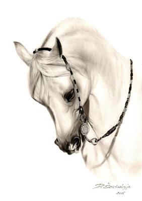Equine Art Drawing - Beautiful White Arabian Horse by Danguole Serstinskaja