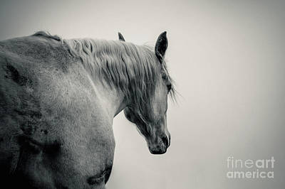 Photograph - Beautiful White Arabian Horse Lonely Horse by Dimitar Hristov