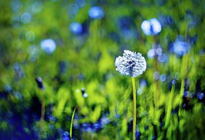 Dandelion Photograph - Beautiful White Dandelion With Seeds On Blue Green Background by Oksana Ariskina